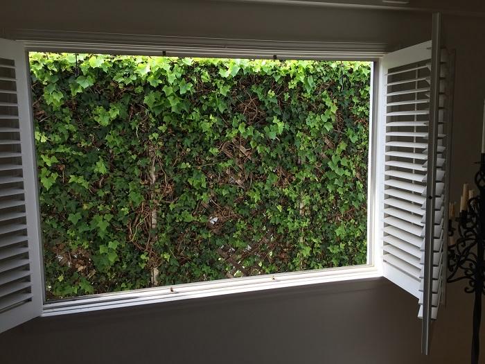Window Replacement in Progress