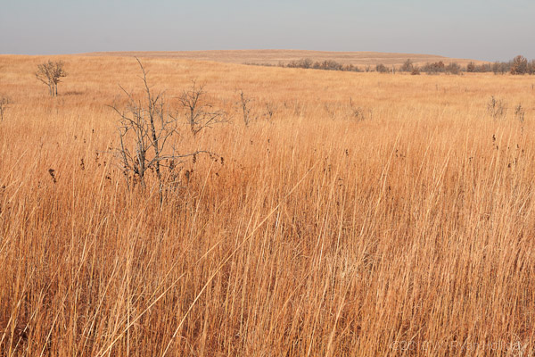 The Tallgrass Prairie Preserve in Oklahoma