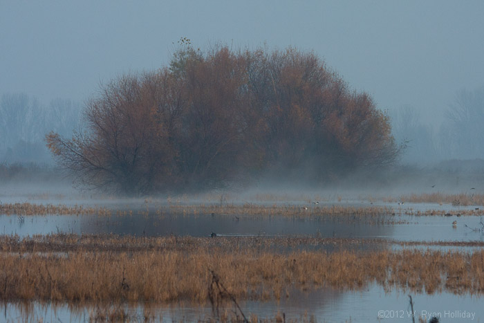 Foggy Landscape in Merced NWR