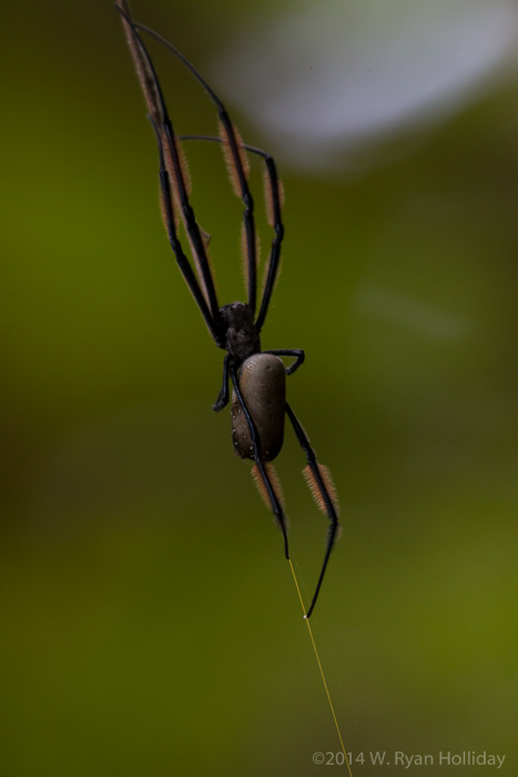 Spider at Lake Duluti