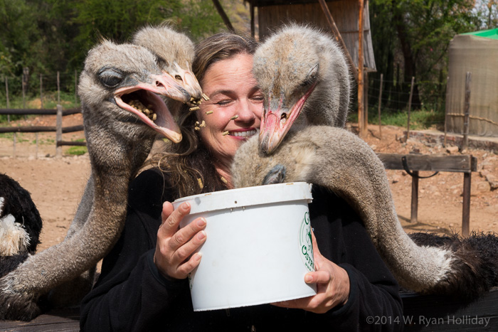 Audrey and ostriches in Oudtshoorn