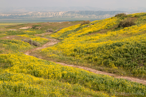 Wildflowers at the Carrizo Plain National Monument