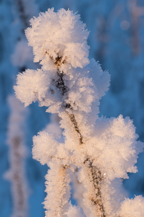 Frosty tree branch in Griffin Park, Fairbanks in Winter